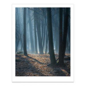 fotografija; printas; foto paveikslas; pirkti; fotografijos printas; arturas jendovickis; jendovickis; peizazas; landscape; medziai; rukas; rukas miske